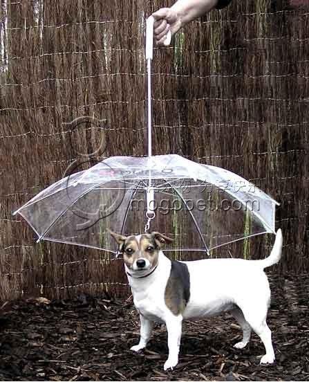 Зонтик для собаки